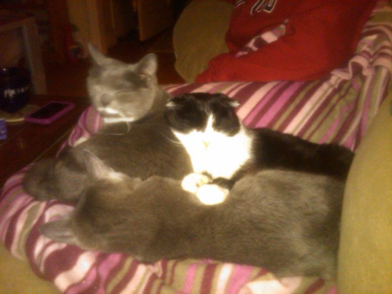 Oliver,Sadie,Mindy-sleepy
