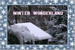 Snowy-backyard1